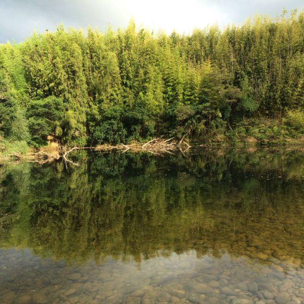 FSC Wälder FSC- zertifiziert, FSC-Zertivikat